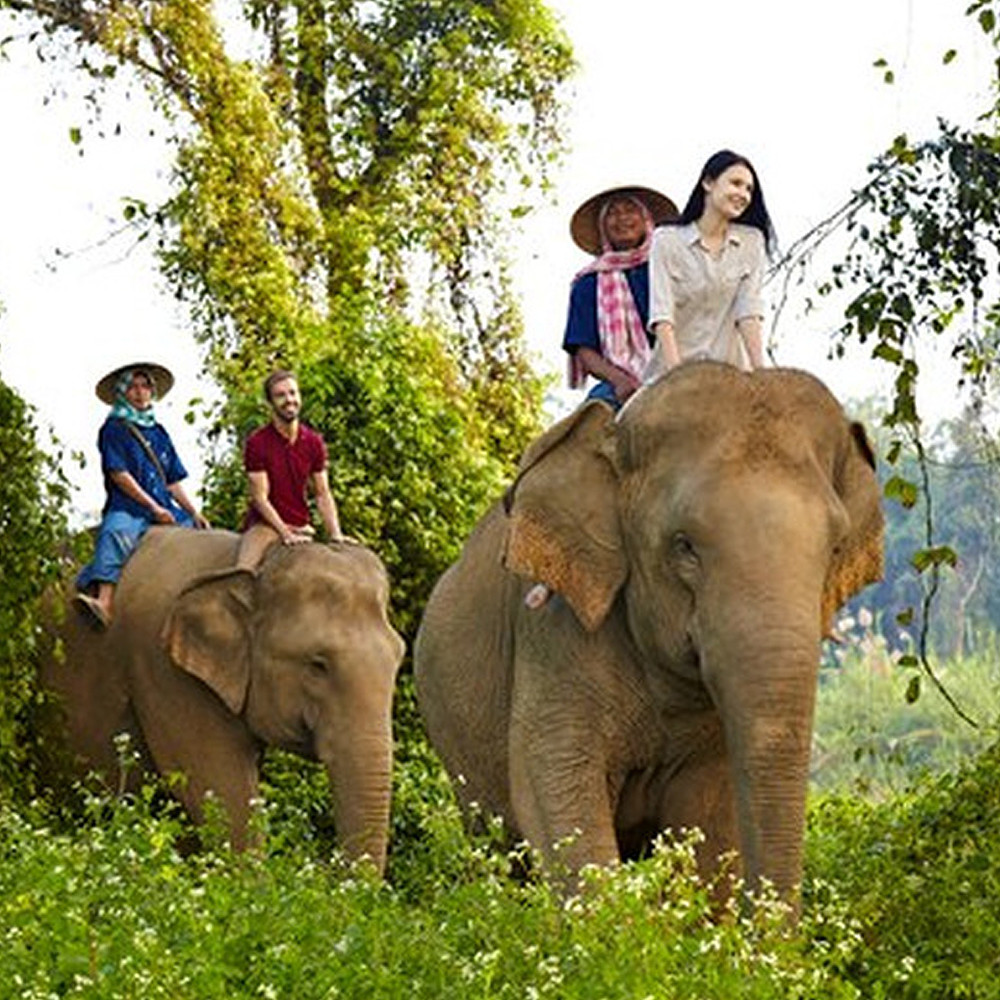 Contribution to Elephant Trekking in Thailand