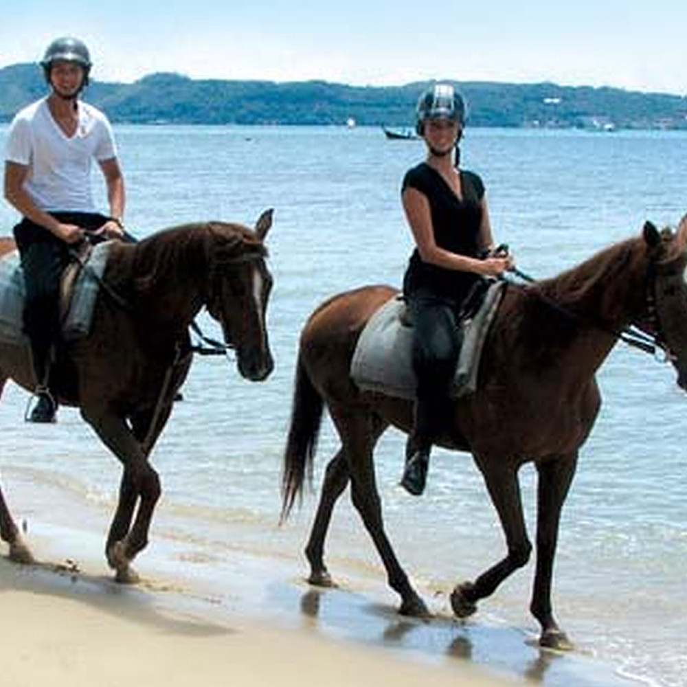 Contribution to Horse Riding Tour in Thailand